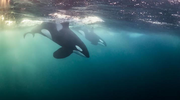 Wildlife Experiences-Tromsø-Silent whale watching excursion from Tromsø-3