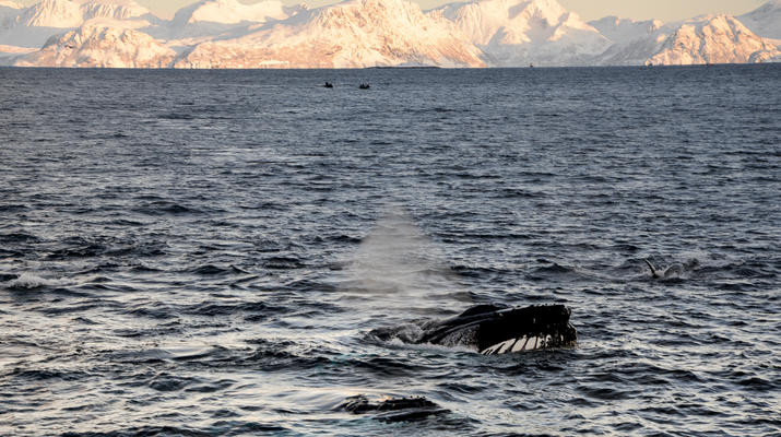 Wildlife Experiences-Tromsø-Silent whale watching excursion from Tromsø-1