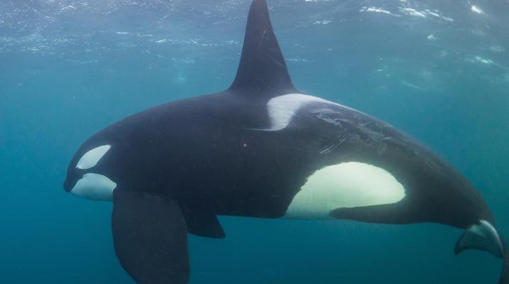 Wildlife Experiences-Tromsø-Silent whale watching excursion from Tromsø-6