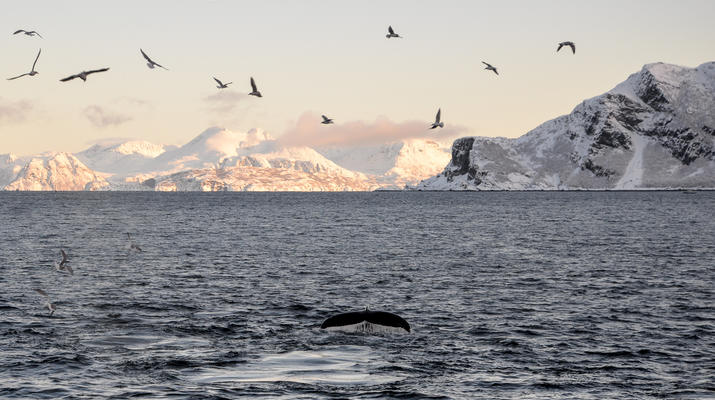 Wildlife Experiences-Tromsø-Silent whale watching excursion from Tromsø-4