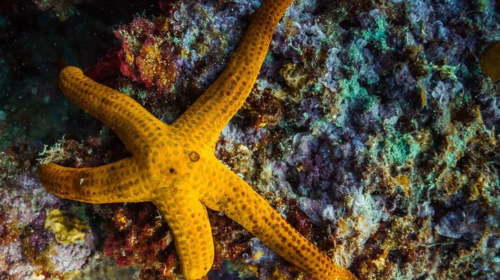 Snorkeling-Antibes-Excursion snorkeling à Antibes-5