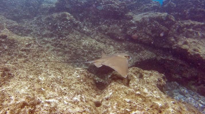 Sea Kayaking-Playa Blanca, Lanzarote-Kayak & Snorkel excursion to Playa Papagayo, Lanzarote-9